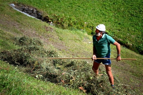 farmer sickling hey