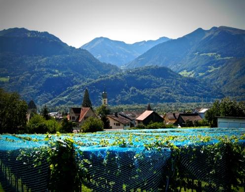 vinyards blue netting nwm 900